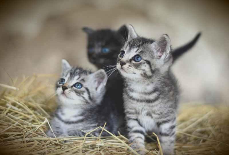 「JPG 画像品質」41に変更した猫の画像