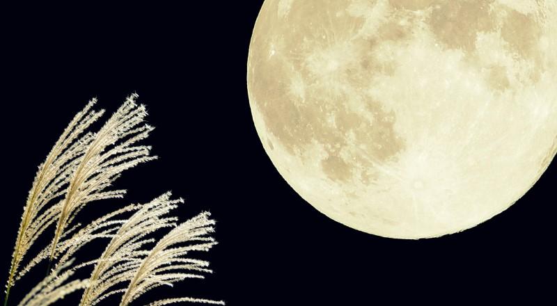 日本の月見の画像